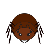 Link to animaru Ant