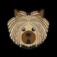 Link to animaru Australian Silky Terrier
