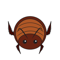 Link to animaru Cockroach