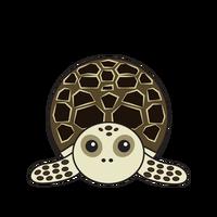 Link to animaru Hawksbill Turtle