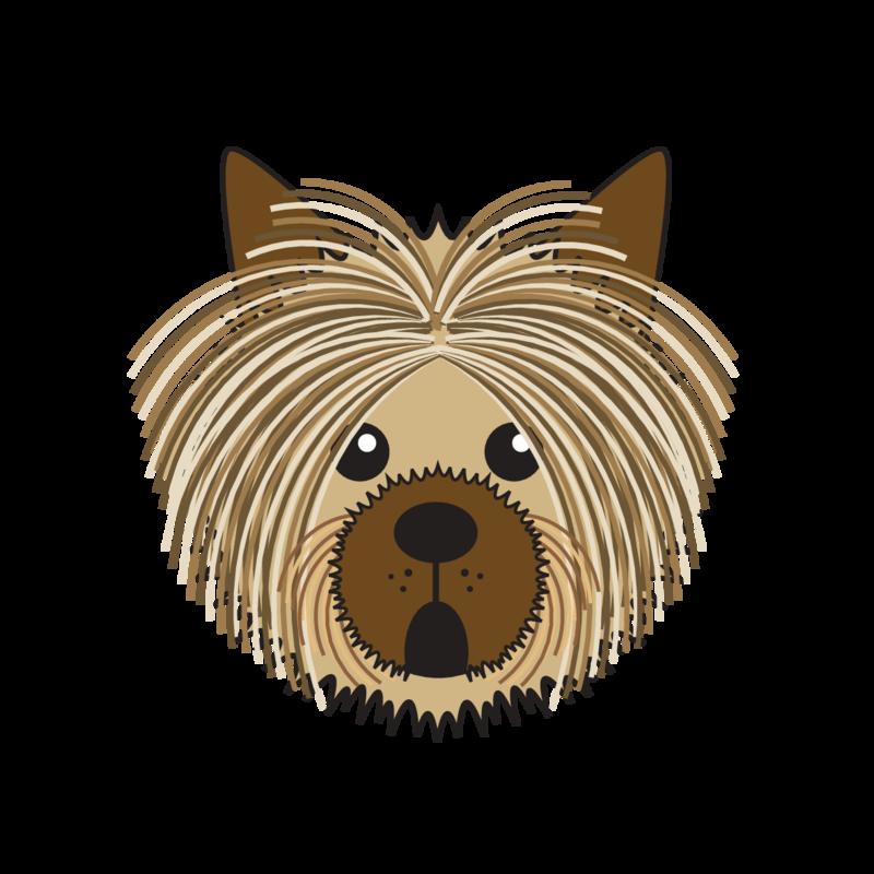 animaru Australian Silky Terrier