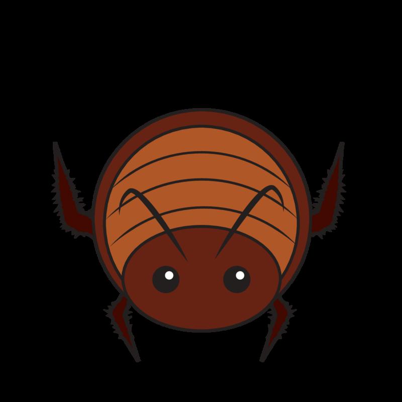 animaru Cockroach