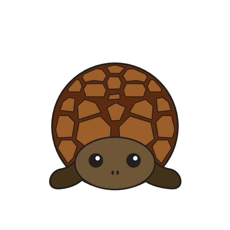 animaru Turtle