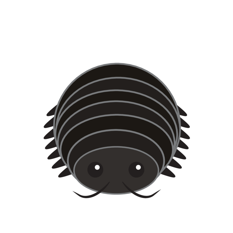 animaru Woodlouse